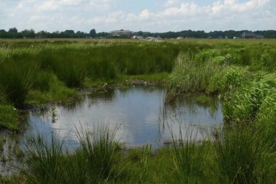 Tijdelijke natuur als oplossing voor braakliggende grond